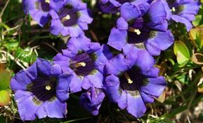 flora_kraeuter-1